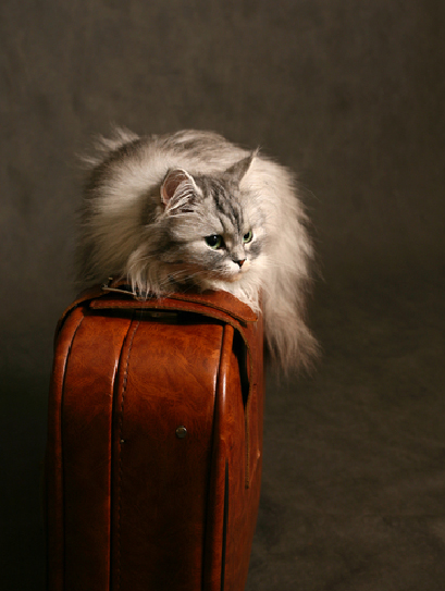 Why do cats try to return to their old home?