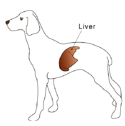 liver_tumors_metastatic_and_miscellaneous-1