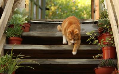 outdoor_cat