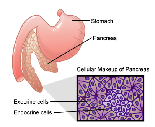 gallbladder surgery after pancreatitis