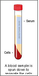 serum_biochemistry-1