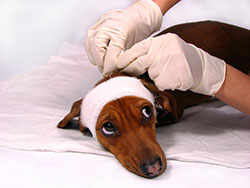 bandage_and_splint_dog_1
