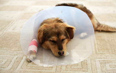 dog_cone_surgery