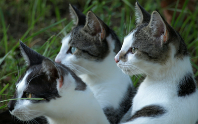 group_of_cats_