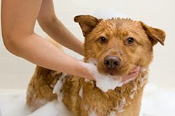grooming_and_coat_care_for_your_dog