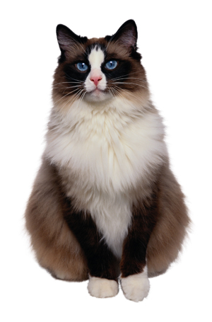 coat_and_skin_appearance_in_the_healthy_cat1