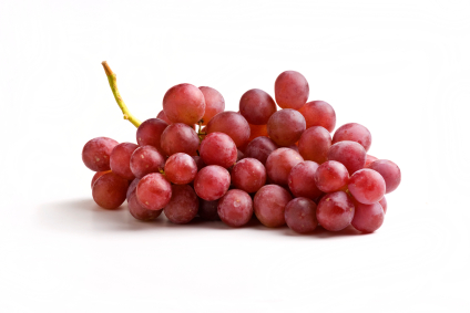grape_and_raisin_toxicity_in_dogs