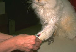 viral_disease_testing_in_cats_-_prevaccination-1