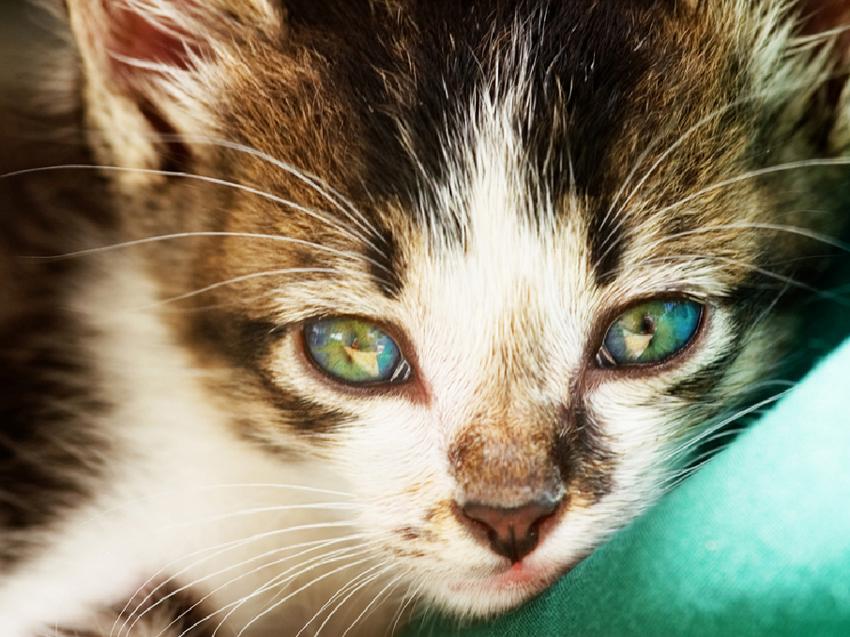 wellness_cat_geriatric-1