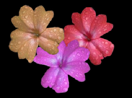 flower_essences-1