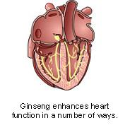 ginseng-2