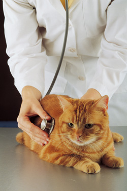 wellness_examination_in_the_cat_1