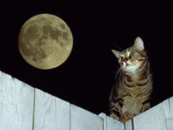 actividad_nocturna_excesiva_en__gatos-2