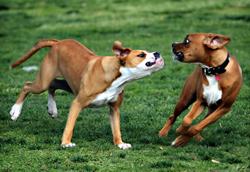 agresividad_entre_perros_de_una_misma_casa