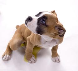 cachorros_adiestramiento_bsico_3