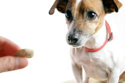 cachorros_jugar_mordisqueando-4