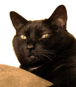 gatos-que-araan-objetos-2