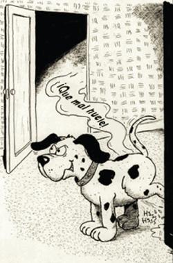 problemas-de-eliminacin-en-perros