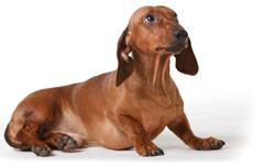cachorros-recomendaciones-para-nuevos-propietarios-8