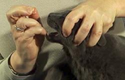 consejos-tiles-para-administrar-comprimidos-a-su-gato