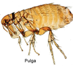 control_de_pulgas-2