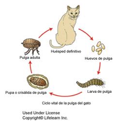 control_de_pulgas_2