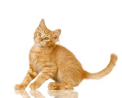 gatitos_recomendaciones_