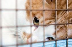 instrucciones_postquirrgicas_en_gatos-1