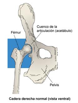luxacin_de_cadera_en_gatos_y_cuidados_postoperatorios