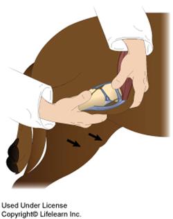 cruciate_ligament_rupture_-_2009-2