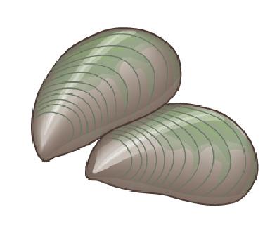 perna-1