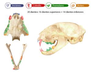 cepillado_de_dientes_en_gatos