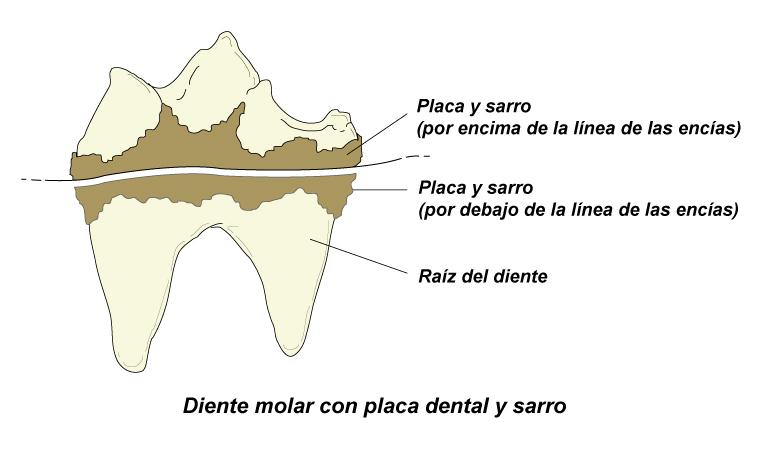 prevencin_del_sarro_en_perros