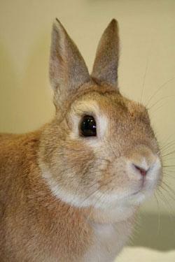 rabbits-fly_strike-1