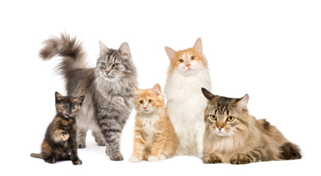 Stupendous Senior Cat Care Special Considerations For Cats Vca Animal Short Hairstyles For Black Women Fulllsitofus