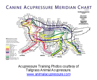 veterinary_acupuncture-2