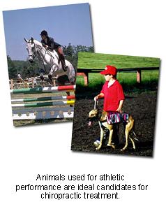veterinary_chiropractic_care-2