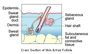 skin__sebaceous_gland_tumors-1