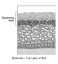 skin__squamous_cell_carcinoma_in_cats-1