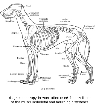 veterinary_magnetic_therapy-3