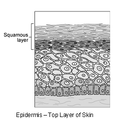 skin_-_squamous_cell_carcinoma_multicentric-1