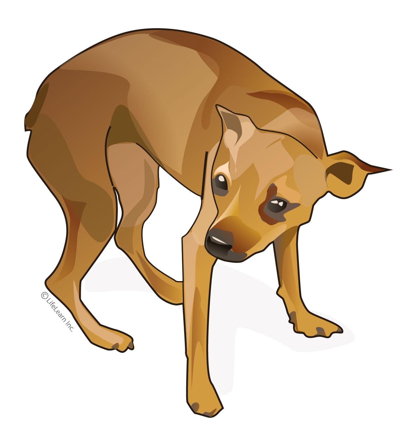 dog_pain_2017-01