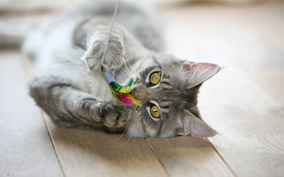 cat_playing