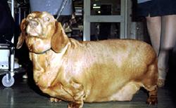 urticaria_in_the_dog-1_2009