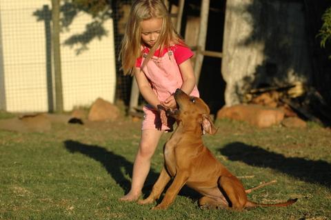 dog_-_child