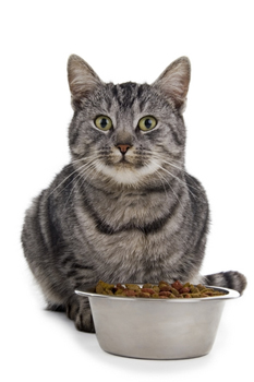 cliented-cat-with-dish