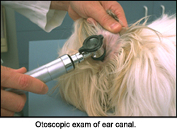 ear_infections-2_2009