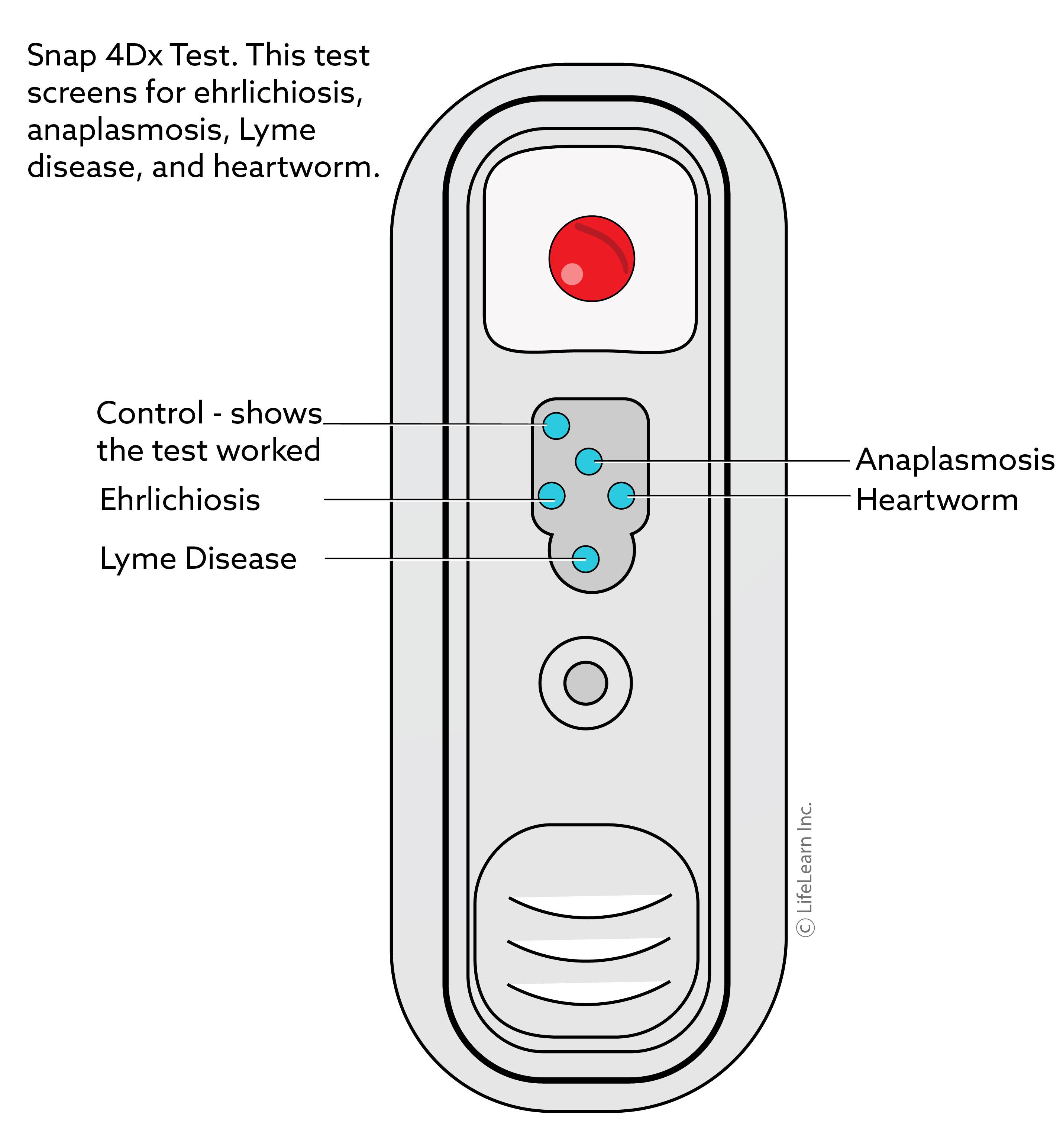 snap_4d_test_hw_lyme_ehrlichia_anaplasma