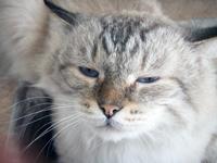 cat_-sick
