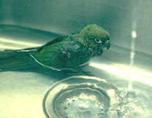 bathing_birds-2